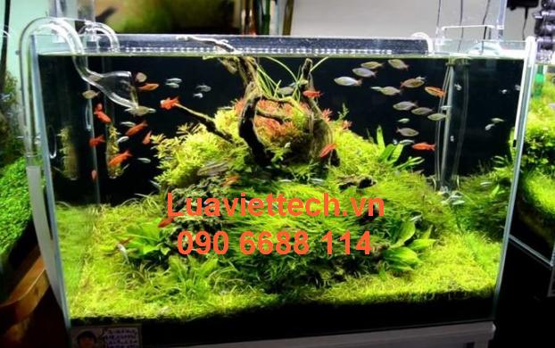 nạp khí co2 bình hồ thủy sinh