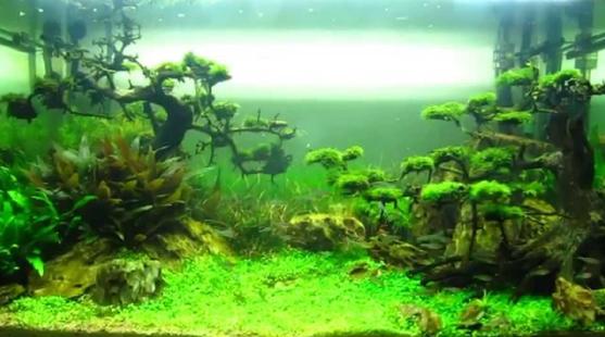 hồ thủy sinh